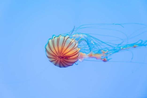 Energetic jellyfish are floating in the ocean