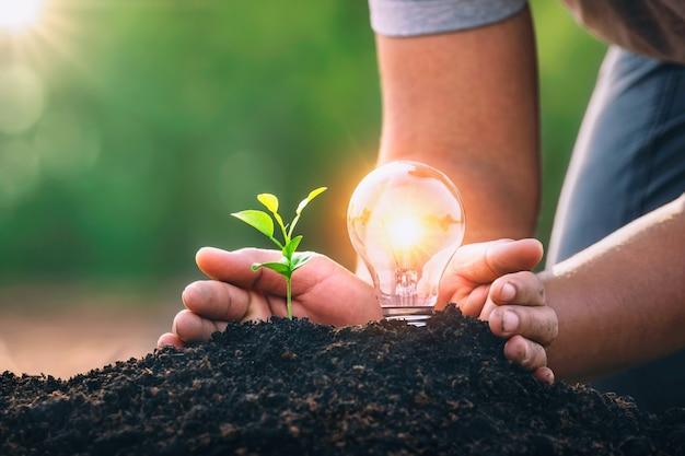 Энергетическая концепция. эко сила. лампочка для защиты рук с маленьким деревцем, растущим на почве