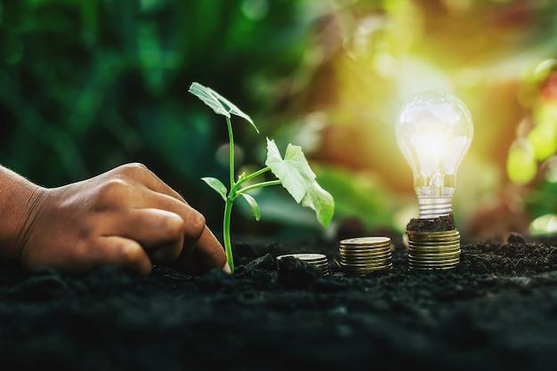 Energy saving light bulb and tree growing on stacks of coins on nature background. saving, accounting and financial concept