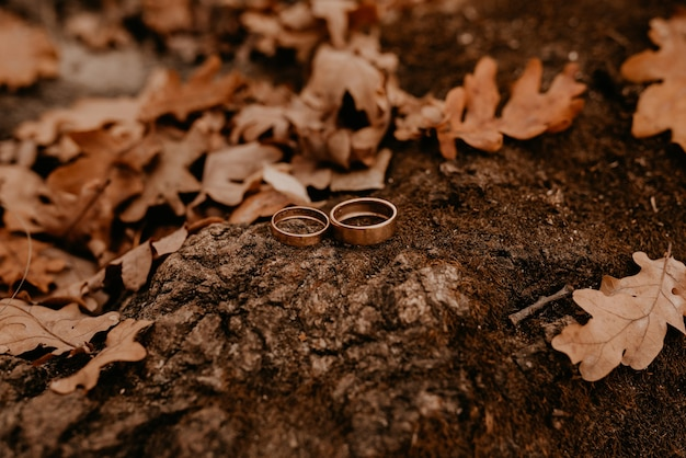 약혼 금 결혼 반지는 돌에 누워
