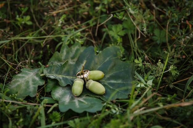 Engagement ring on acorns on oak leaf. proposal of marriage concept