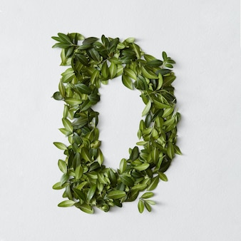 English alphabet concept. alphabet isolated. abc letters from green leaves. letter d represented with green leaves. symbol d on white.