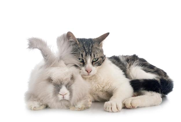 English angora rabbit and cat