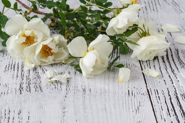 English roses lay on a white lace.