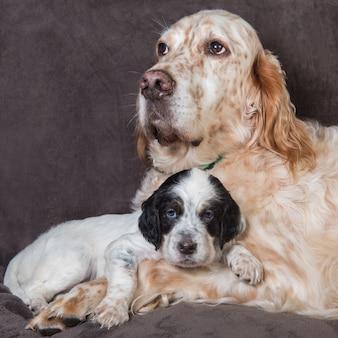 イングリッシュセッターの大きな犬の母と子犬の肖像画