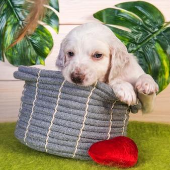 緑の熱帯の背景にバスケットに座っている花を持つイングリッシュセッター子犬犬