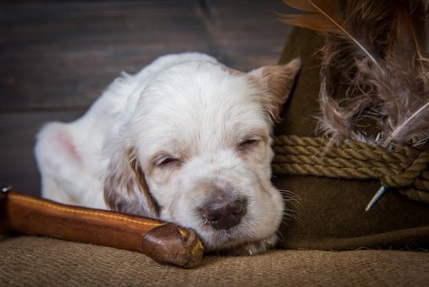 イングリッシュセッターの子犬とナイフと帽子