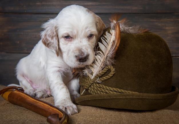 ハンティングナイフとアヒルの羽のついた帽子の横にあるイングリッシュセッター子犬狩猟犬