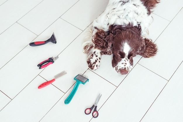 Английский спрингер-спаниель ложится на пол рядом с аксессуарами для груминга для собак.