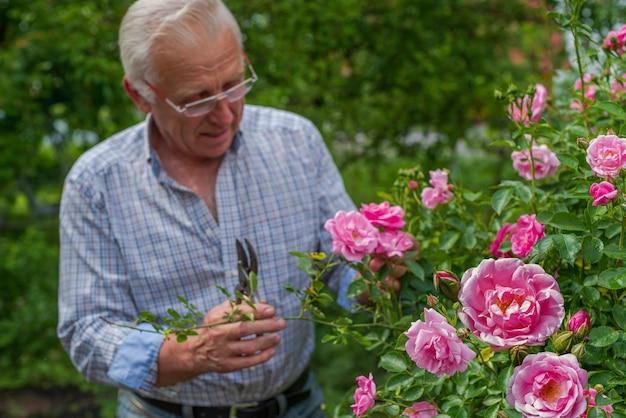 エニオールマンは晴れた日にバラを切りました。春と夏のガーデニング。