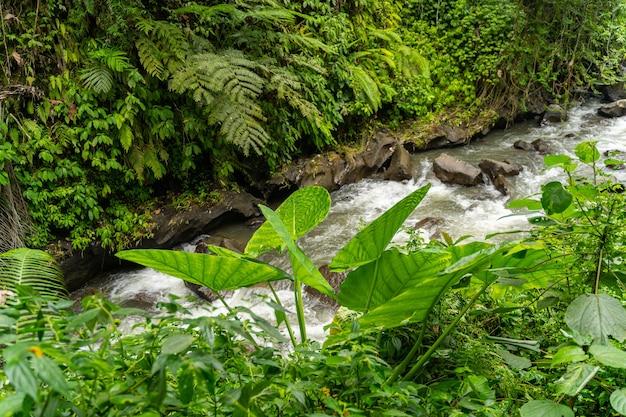 너의 인생을 즐겨라. 열 대 숲, 아름 다운 녹색 풍경에서 실행 빠른 산 강 스톡 사진 프리미엄 사진