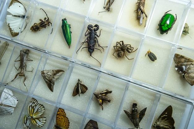 Entomology