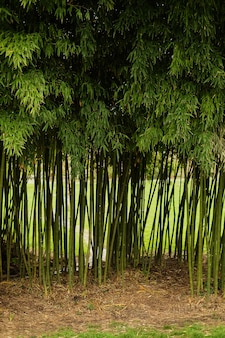 Entrance of the bamboo forest