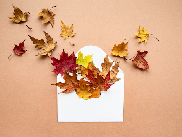 Envelope with dried leaves