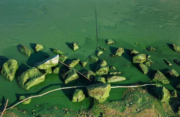 물에 조류 꽃과 이끼 낀 돌이 있는 환경 배경