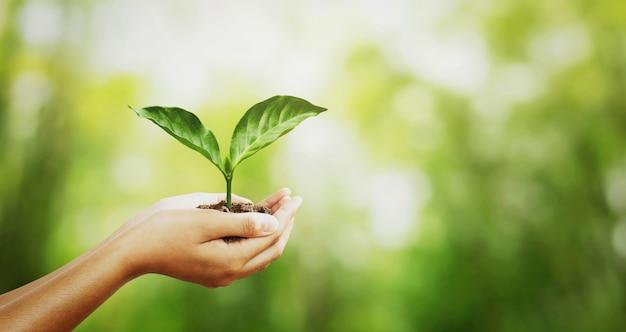 環境コンセプト。太陽の光の背景を持つ緑のぼかしに若い植物を持っている手