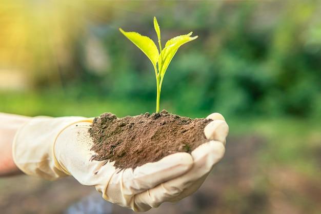 환경 지구의 날 묘목을 키우는 나무의 손. bokeh 녹색 배경 여성의 손을 잡고 자연 필드 잔디 숲 보전 개념에 나무