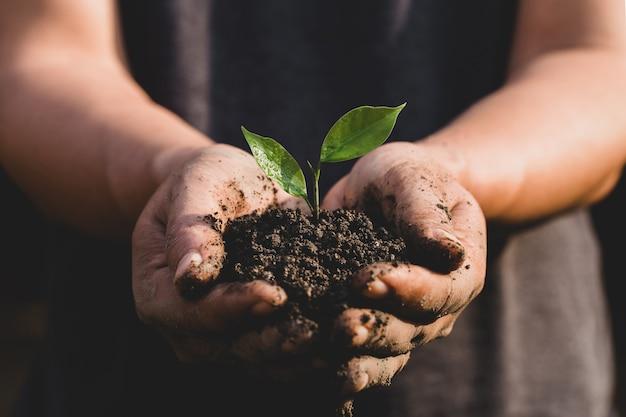 환경 지구의 날 묘목을 키우는 나무의 손에. 남자 손을 잡고 자연 필드 잔디 숲 보존 개념에 성장하는 녹색 식물. 세상을 구할