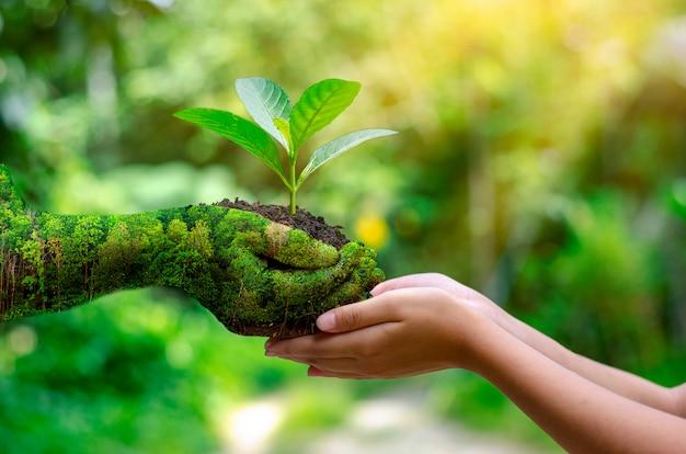 Окружающая среда день земли в руках деревьев растет рассада.