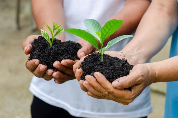 Окружающая среда день земли в руках деревьев растет рассада