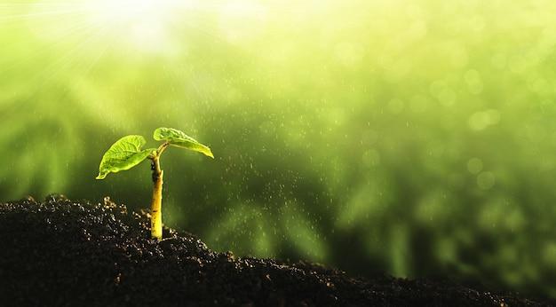 環境、きれいな惑星を救う、エコロジーの概念