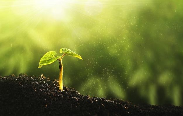 Окружающая среда всемирный день земли. молодое растение, растущее на солнечном свете.