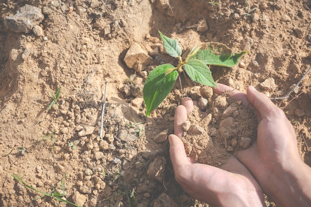 Environmental conservation in the garden for children.