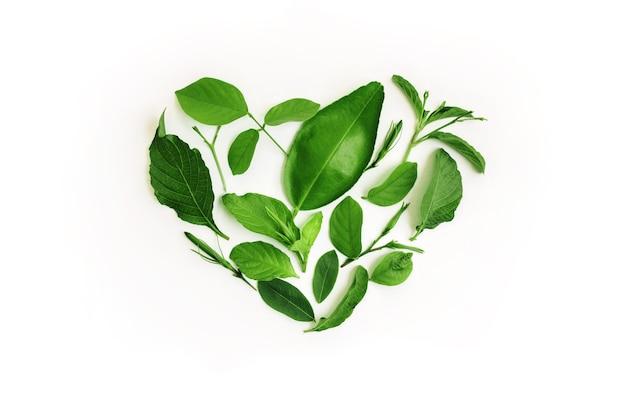 환경, 건강 관리. 마음으로 녹색 잎입니다. 녹색 에너지, 재생 가능하고 지속 가능한 자원