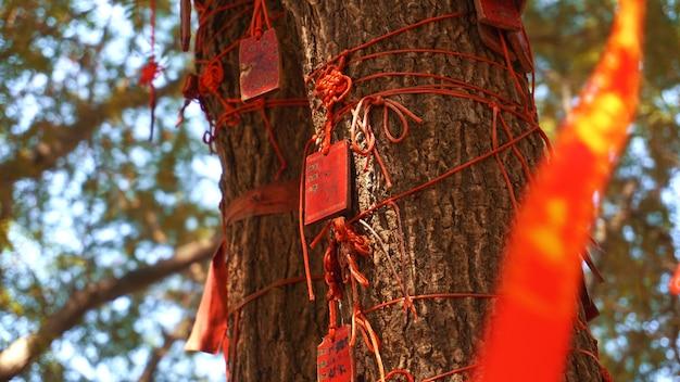 Eople은 중국 싼야에서 행운을 빌기 위해 ema wood 태그 또는 나무 레이블을 쓰고 걸어 놓습니다.