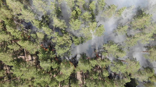Epic aerial view of smoking wild fire. large smoke clouds and fire spread. forest and tropical jungle deforestation. amazon and siberian wildfires. dry grass burning. climate change, ecology, earth