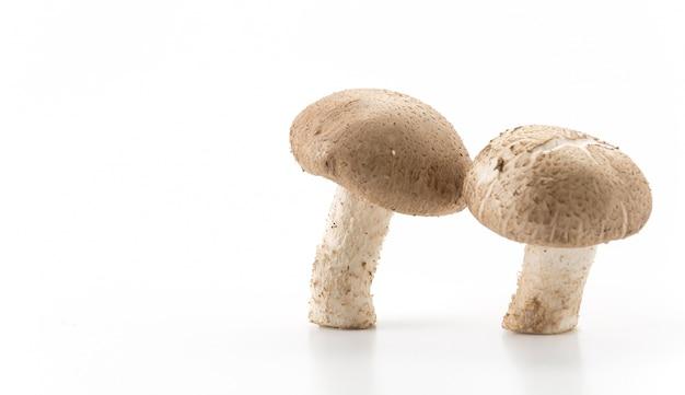 에 링기 버섯
