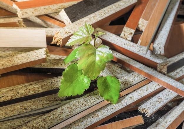 Побег дерева от отходов производства мебели. концепция охраны природы.