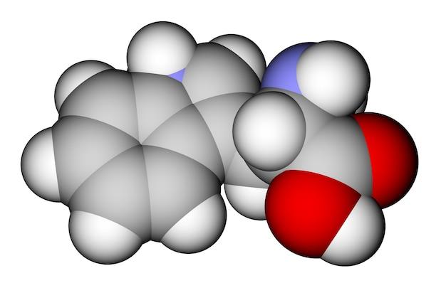 필수 아미노산 트립토판 3d 분자 구조