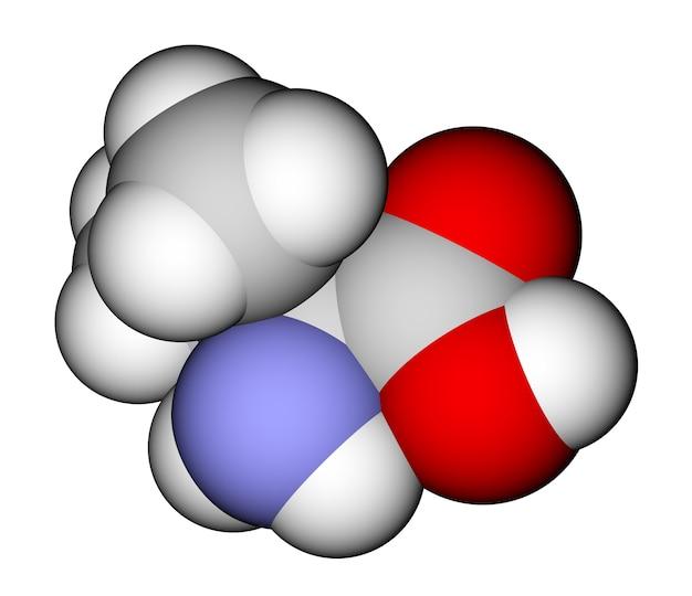 필수 아미노산 발린 3d 분자 모델
