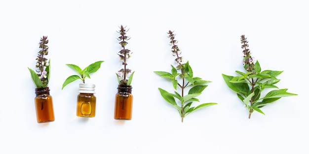 Essential oil bottles with fresh sweet basil leaves and flower on white .