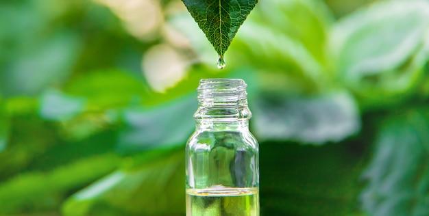 Эфирно-масляный экстракт лечебных трав в бутылочке. выборочный фокус. природа.