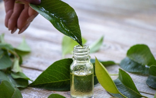 Essential oil of herbs in a small bottle, nature. selective focus