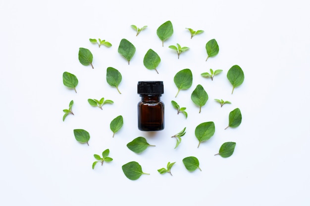 Essential oil with fresh oregano leaves on white.