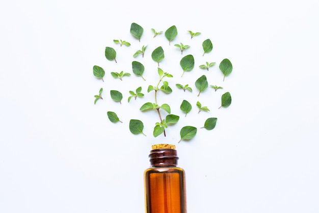 Essential oil with fresh oregano leaves