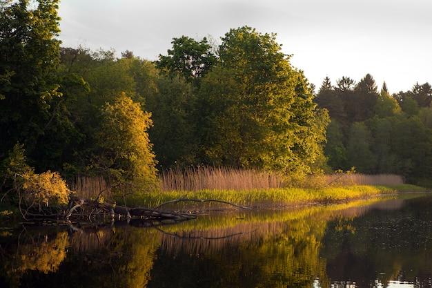 Природа эстонии на реке пирита. вечерний оранжевый закат над рекой в летнее время. пейзаж с упавшим деревом и травой у реки.