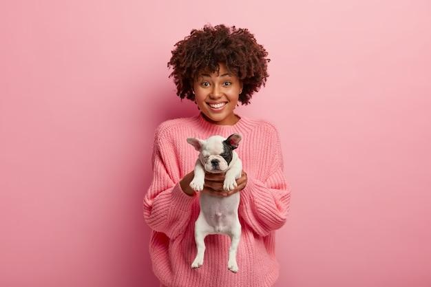 Этническая красивая рада женщина дарит вам маленького щенка французского бульдога, просит заботиться о животном, имеет зубастую улыбку, носит большой джемпер, изолированный над розовой стеной.