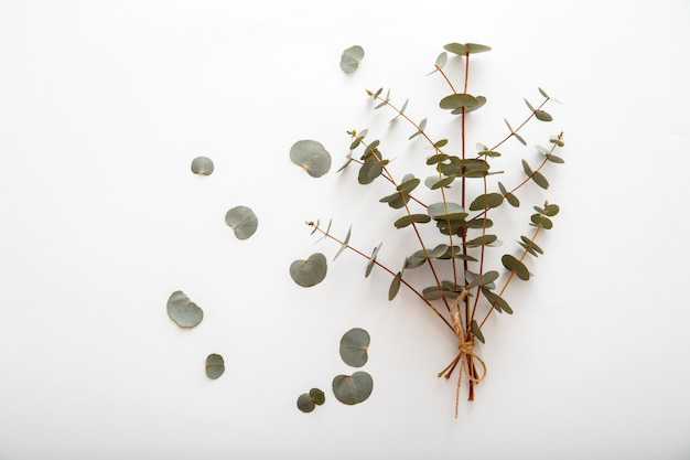 Eucalyptus in bouquet. bunch of eucalyptus branches tied in bouquet and lies on white background. top view with copy space. spring greenery flowers.