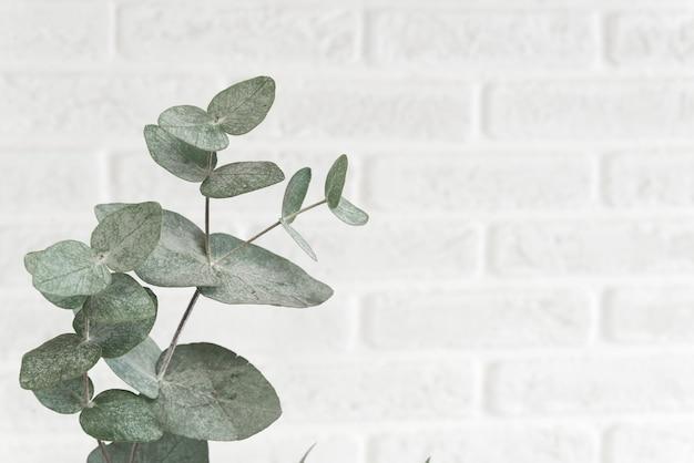 明るい背景、スタジオショットで分離されたユーカリの枝。トレンディなスカンジナビア色のレンガの壁にぶら下がっている装飾的な植物で、テキスト用のスペースがあります。