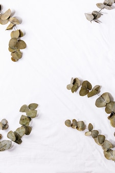 Eucalyptus branch round leaves over white cotton textile background. flat lay, copy space