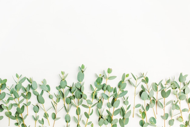Eucalyptus branch on white background. flat lay, top view