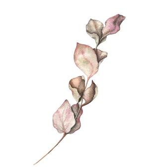 ユーカリの枝と水彩の手描きイラストを残します。