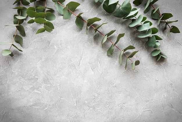 Eucalyptus branches on a concrete background