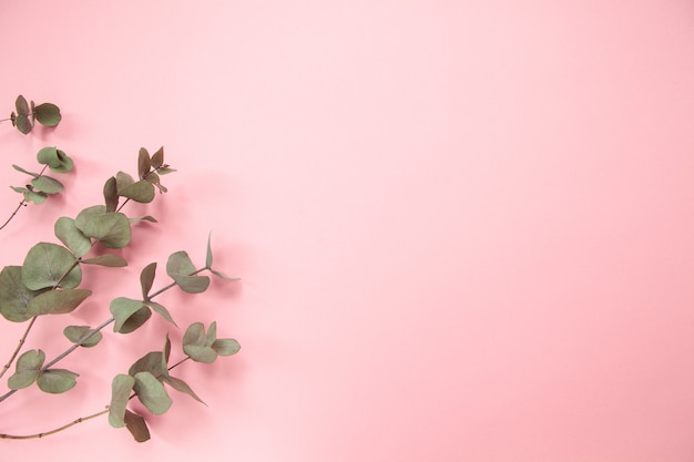 Eucalyptus branches on millennial pink background. flat lay. copy space. horizontal