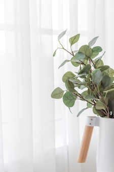 Eucalyptus branches in a minimalistic white vase on white background of curtains near the window