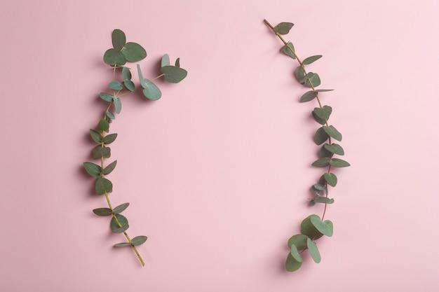 분홍색 배경에 유칼립투스 가지 신선한 유칼립투스 잎은 천연 오일과 향수를 기반으로 화장품의 기초로 고품질 사진